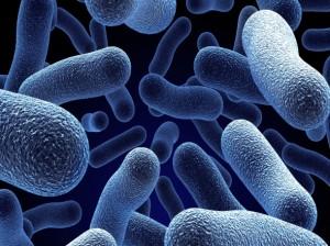 Бактерии в септик
